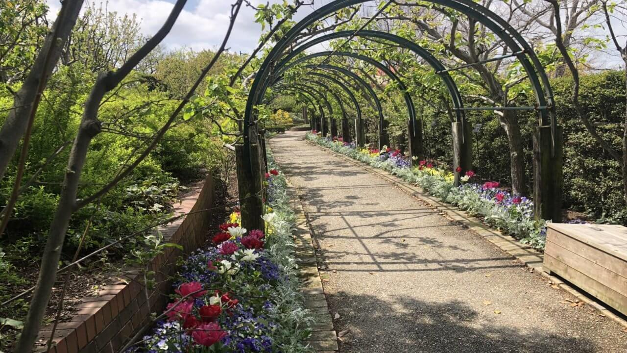 デンパーク内の花のトンネル