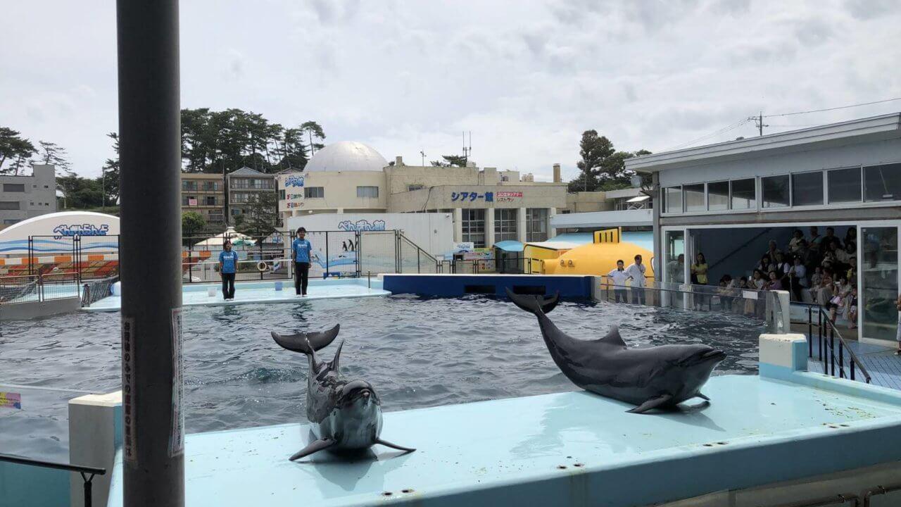 越前松島水族館のイルカショー