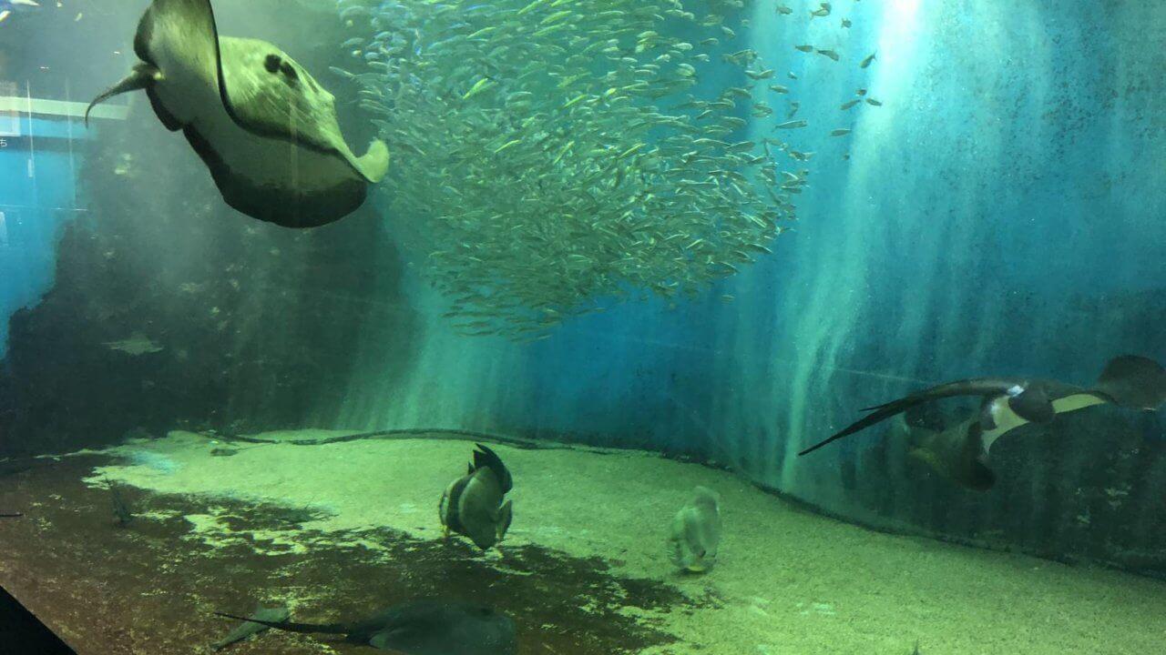 越前松島水族館の飼育水槽