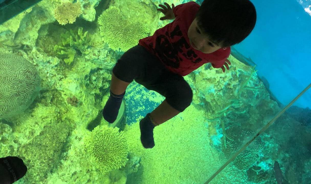 越前松島水族館の透けている床