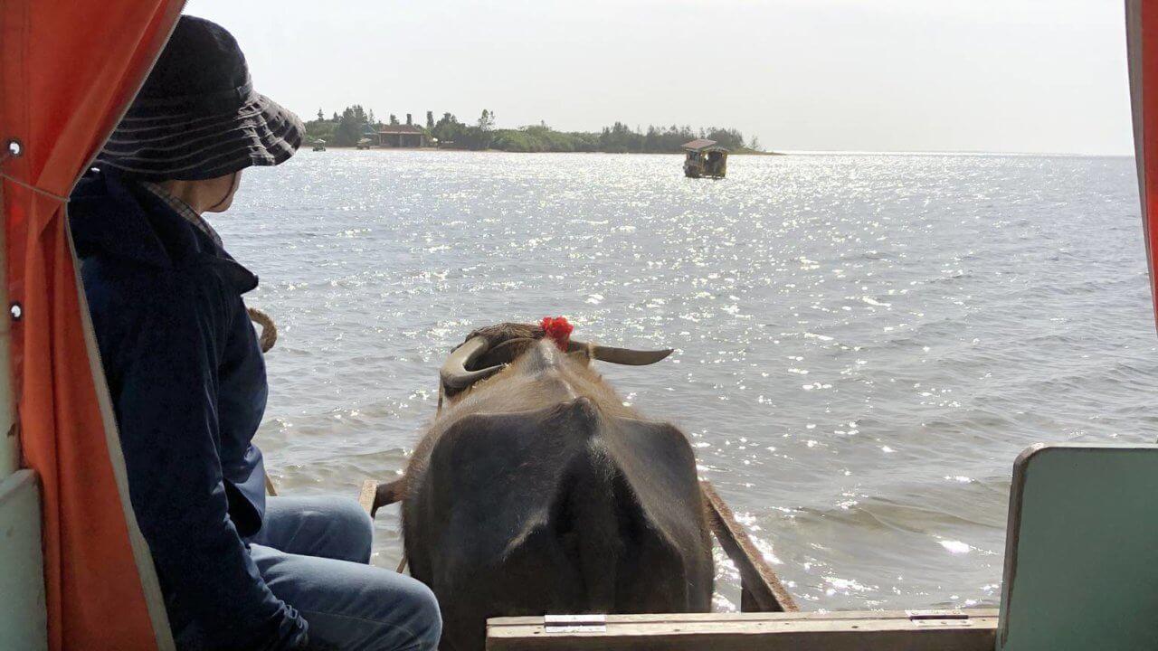 西表島から水牛で由布島へ