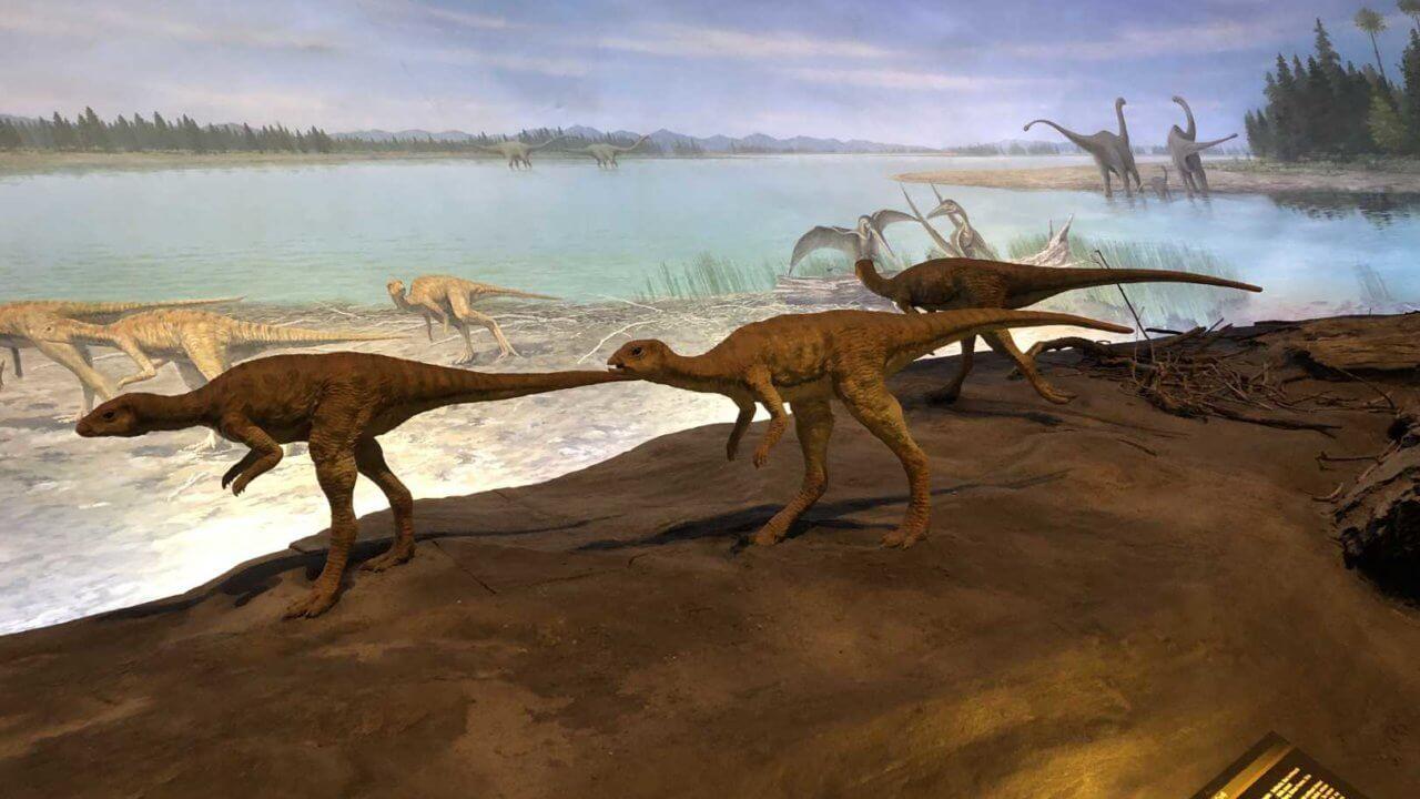福井県立恐竜博物館のリアルな恐竜標本