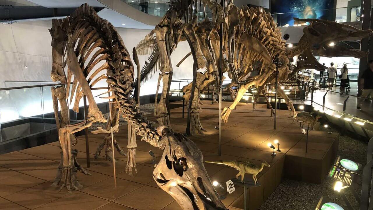福井県立恐竜博物館の骨格標本たち