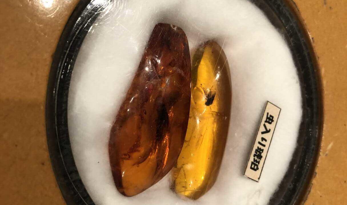 福井県立恐竜博物館にある琥珀のレプリカ