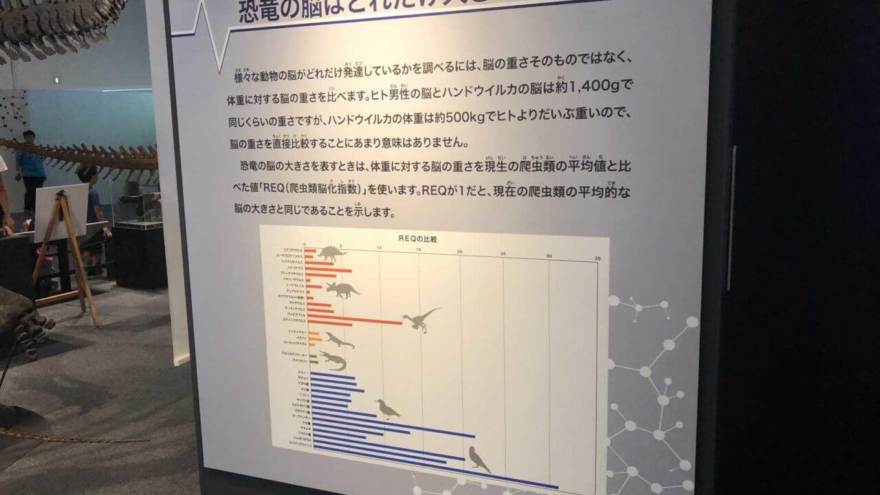 福井県立恐竜博物館の恐竜の脳サイズ表
