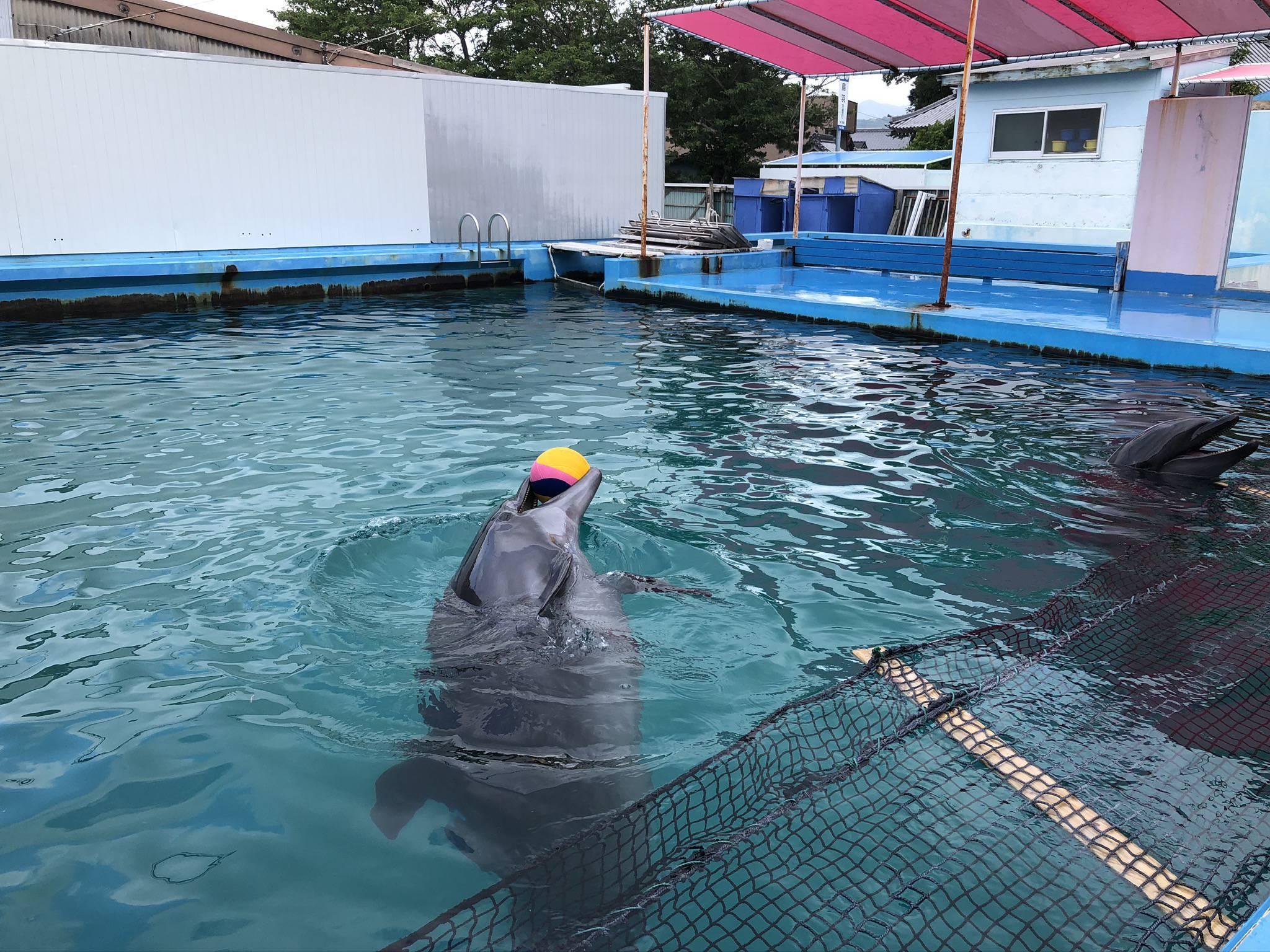 伊勢シーパラダイスの野外プールのイルカ